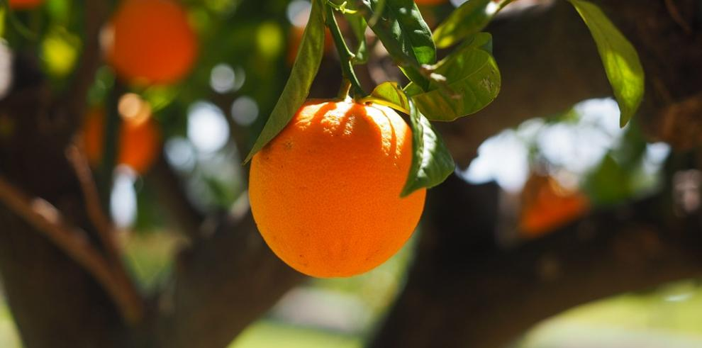 Fortalecerán la industria naranja