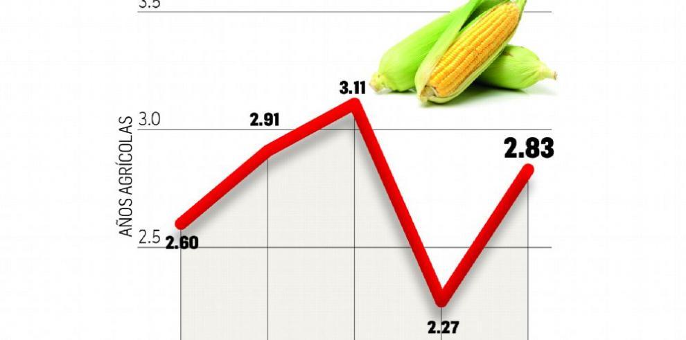 Sube la producción de arroz y maíz, pero la superficie sembrada no mejora