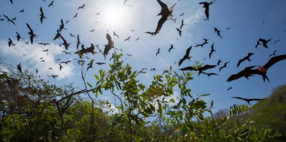 Solicitud de proteger isla Bona para aves caerá en 'saco roto'