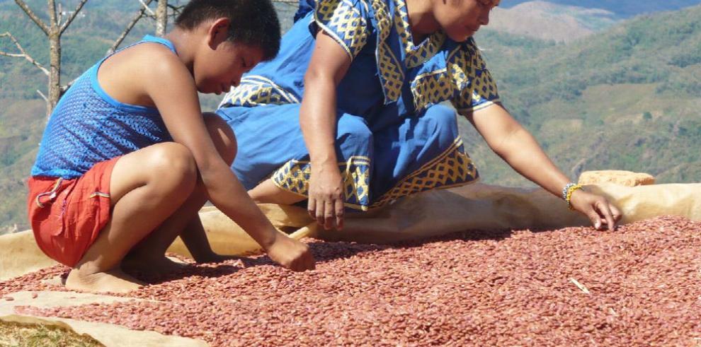 No se aprovecha todo el potencial de la agricultura familiar: FAO