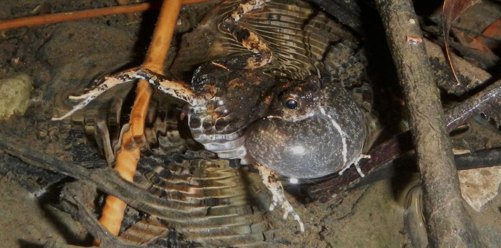 Las ranas y el sexo en la ciudad