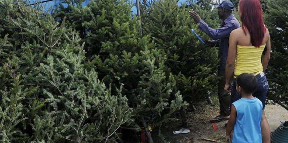 Vende arbolitos de Navidad desde $14, según encuesta de la Acodeco