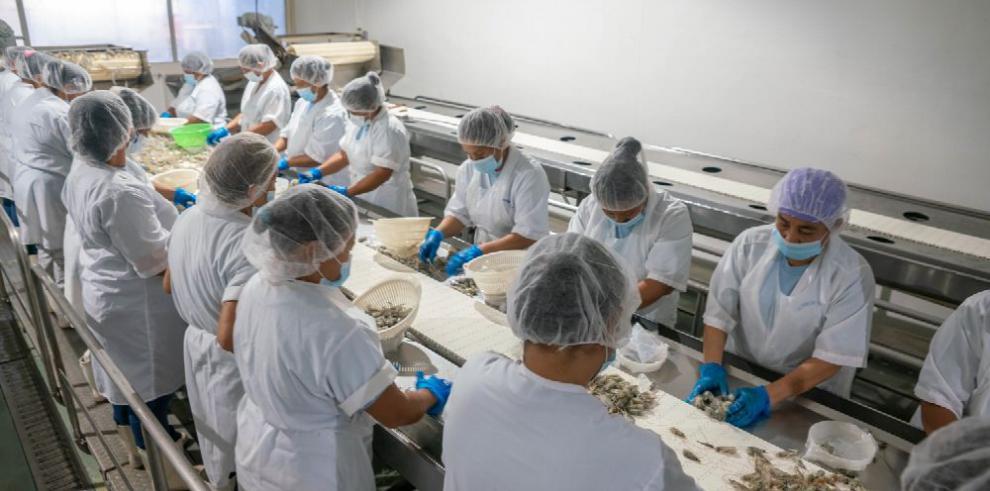 Camaronera con sello Panamá Exporta envía 40 mil libras a Nueva York