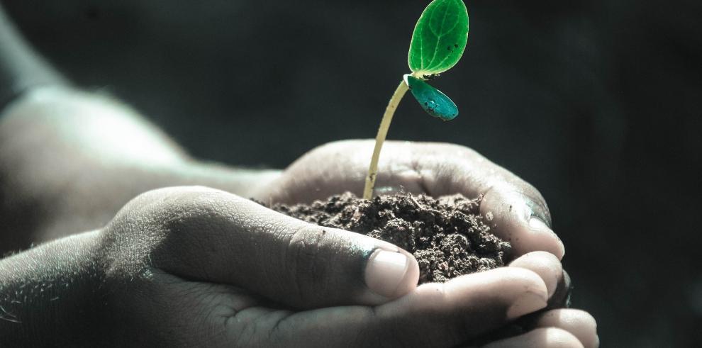 Panamá se compromete a revertir degradación que afecta al 28% de sus suelos