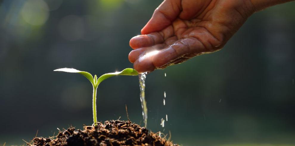Los árboles son fuente de vida