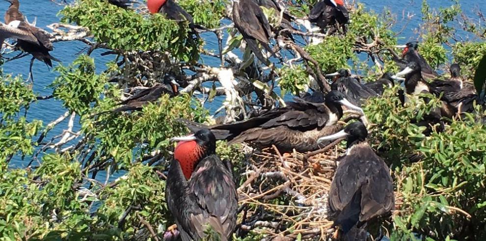 La fauna panameña, entre logros y nuevas amenazas