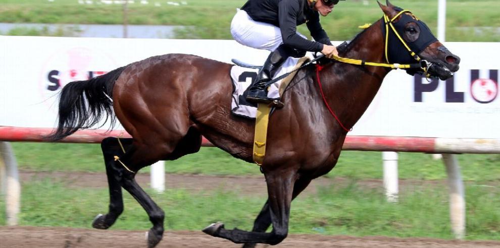 Equinos venezolanos inician sus trabajos