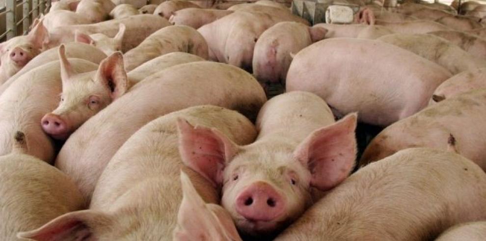 EE.UU. autoriza importación de cerdo de todo el territorio mexicano