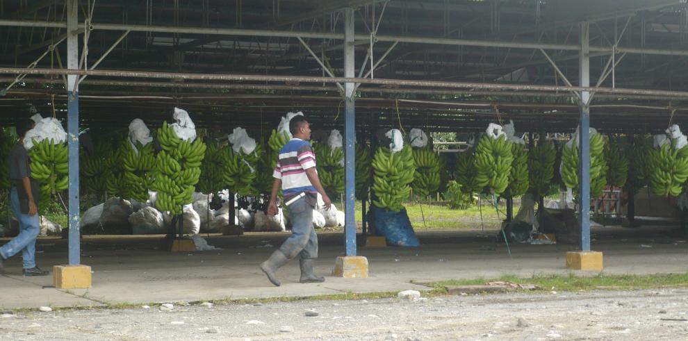Panamá y Banapiña firman contrato de sub-arrendamiento de fincas en Barú