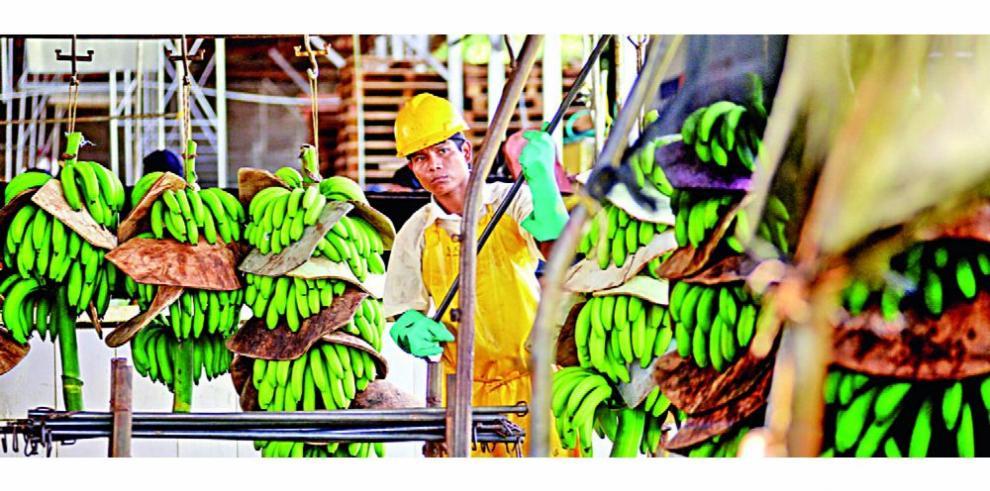Mitradel monitorea acuerdos bananeros