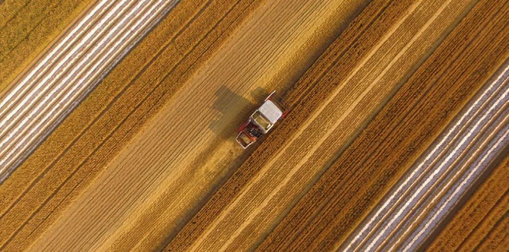 Sector agrícola de Argentina busca renovarse para 2019