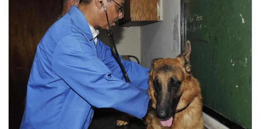 Médicos veterinarios anuncian paro a partir de este lunes
