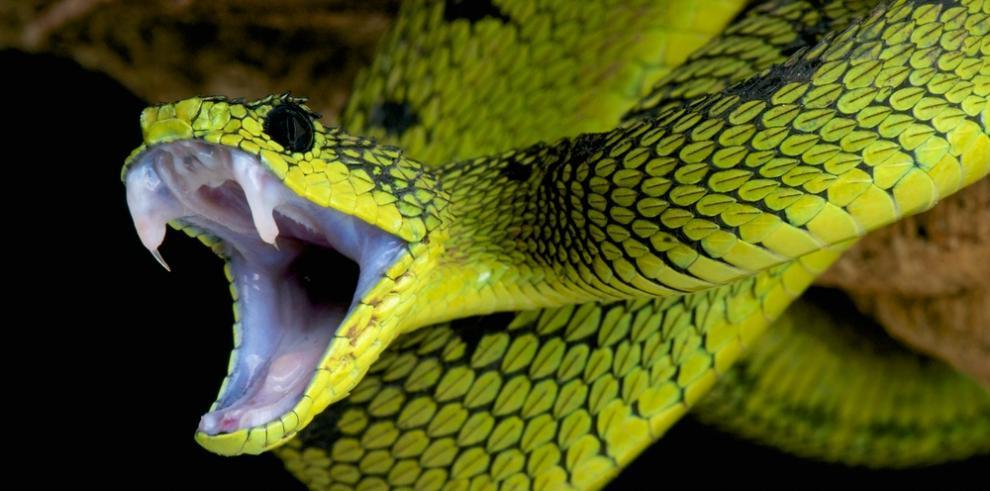 Documental retrata la problemática mundial de las mordeduras de serpientes