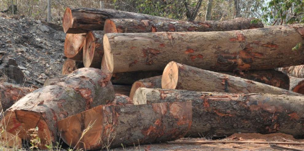 Aumenta el comercio de madera en Panamá