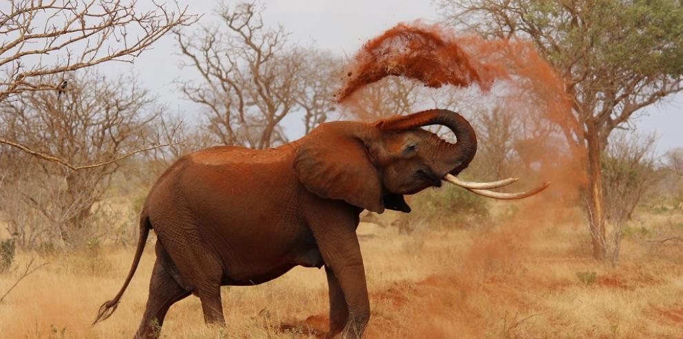 Elefante mata a funcionario forestal en India