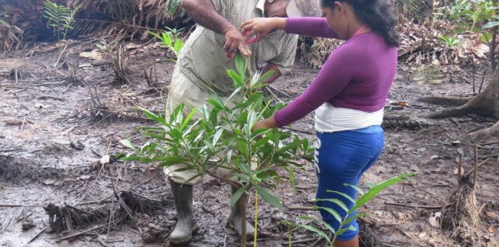 Panamá tendrá una guía para restaurar los manglares degradados