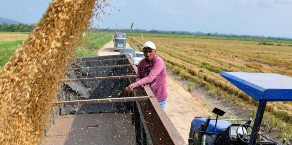 Panamá importará 214,104 quintales de arroz