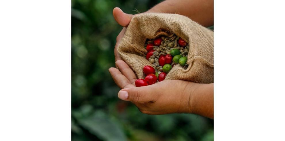 'Panamá: Café', el libro que hace un recorrido por la historia del café en Panamá