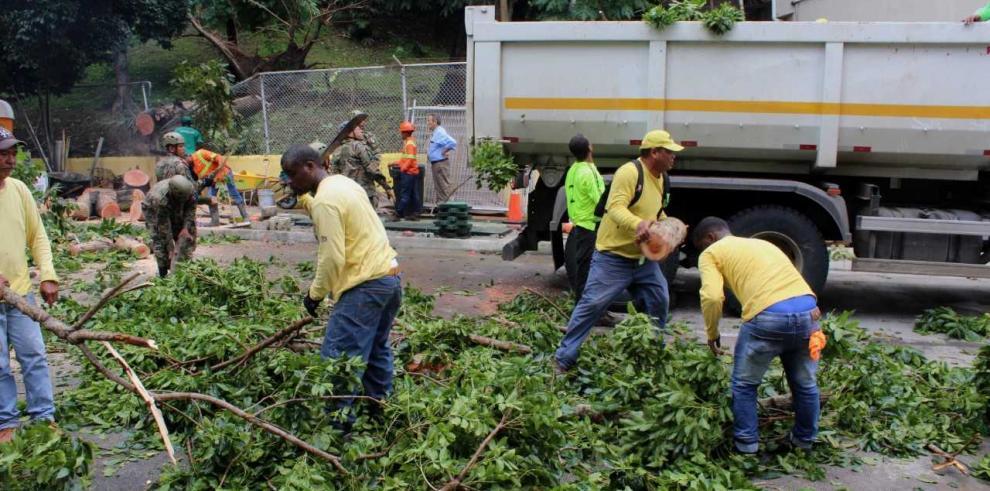 Autoridades retiran árboles derribados por tormenta en Panamá