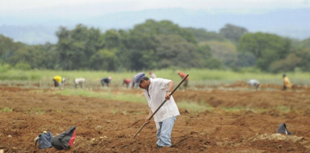 Plan para robustecer la agricultura familiar