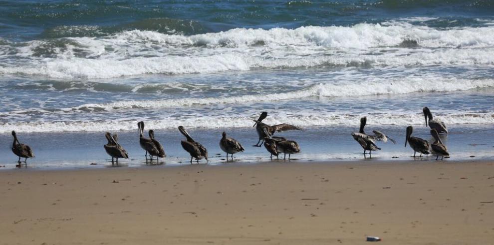 Turistas podrán retornar a Isla Iguana
