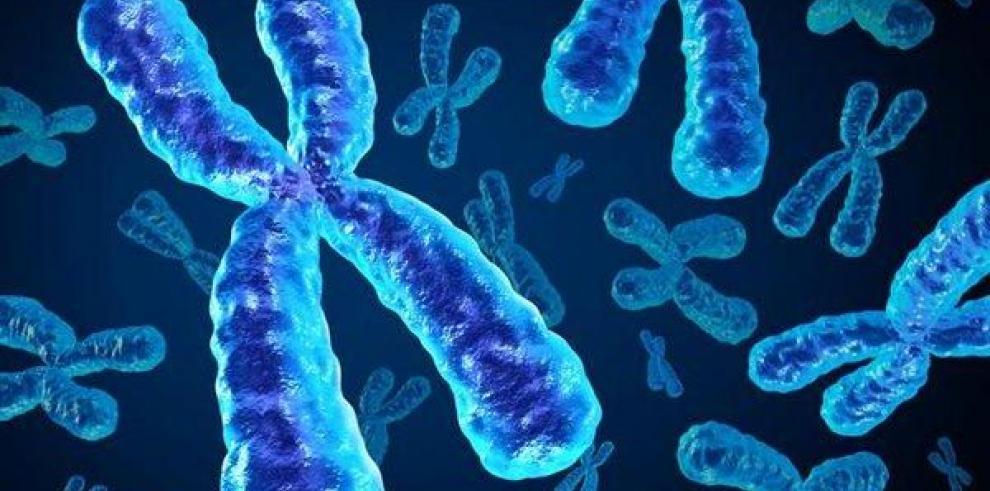 Un cromosoma X puede ser razón de longevidad femenina, afirma estudio