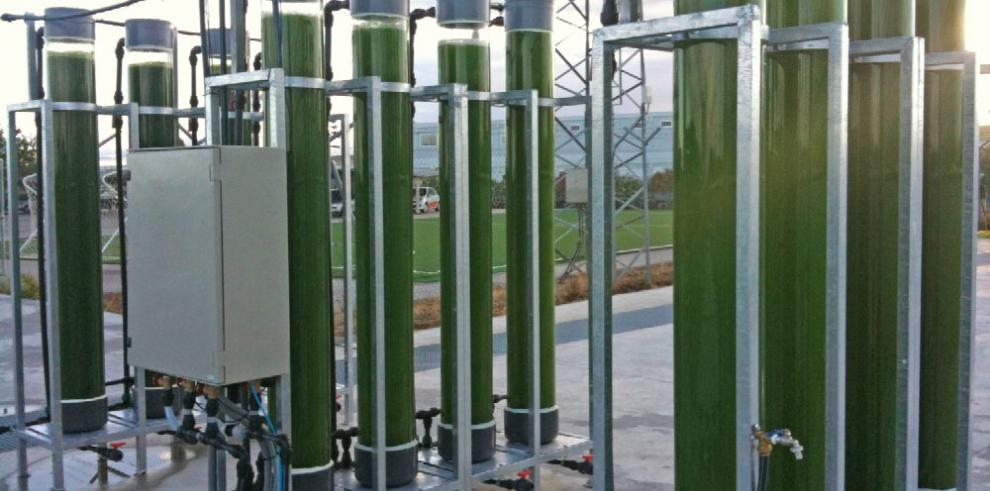 Microalgas, el nuevo y prometedor combustible
