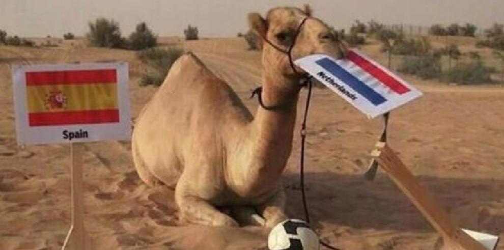 Animales que han sido usados como oráculos del Mundial y se volvieron virales