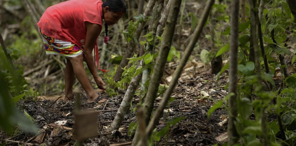FAO destaca liderazgo de mujeres indígenas para lograr seguridad alimentaria