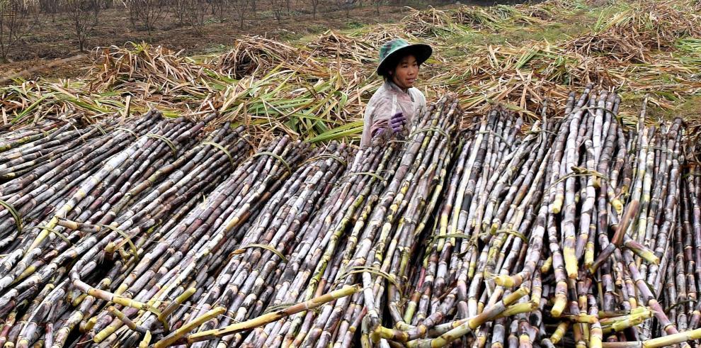 China formará a campesinos como parte de la reforma del sector