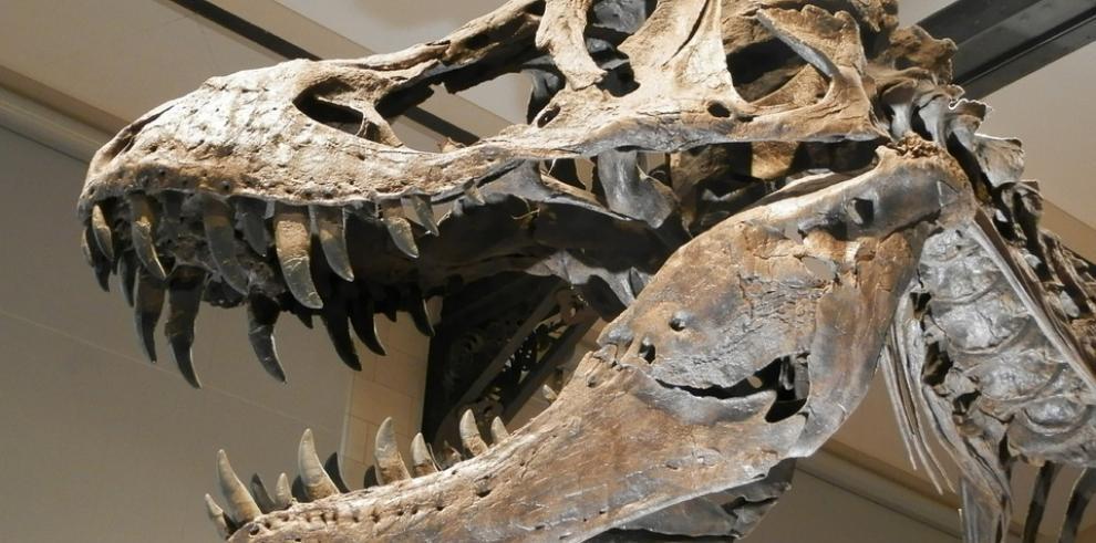 Huellas de dinosaurios en isla escocesa de Skye arrojan luz sobre evolución
