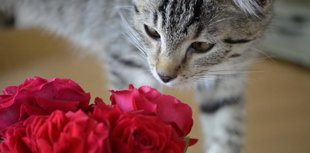 El Día de los Enamorados se extiende a las mascotas estadounidenses