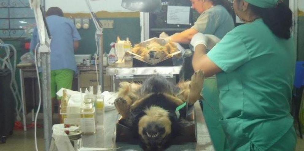 Médicos veterinarios en alerta, exigen sanción del proyecto de ley 574