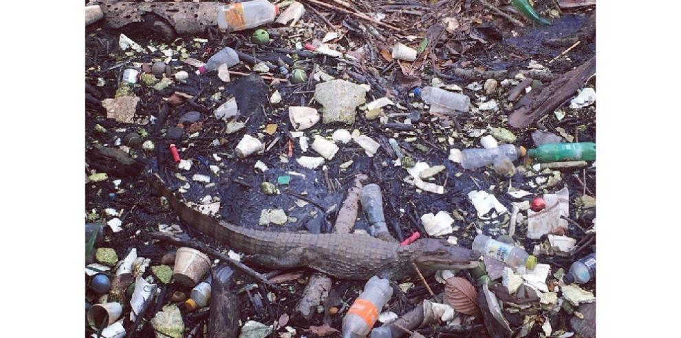 Embajador de Países Bajos en Panamá critica mal manejo de basura en Albrook