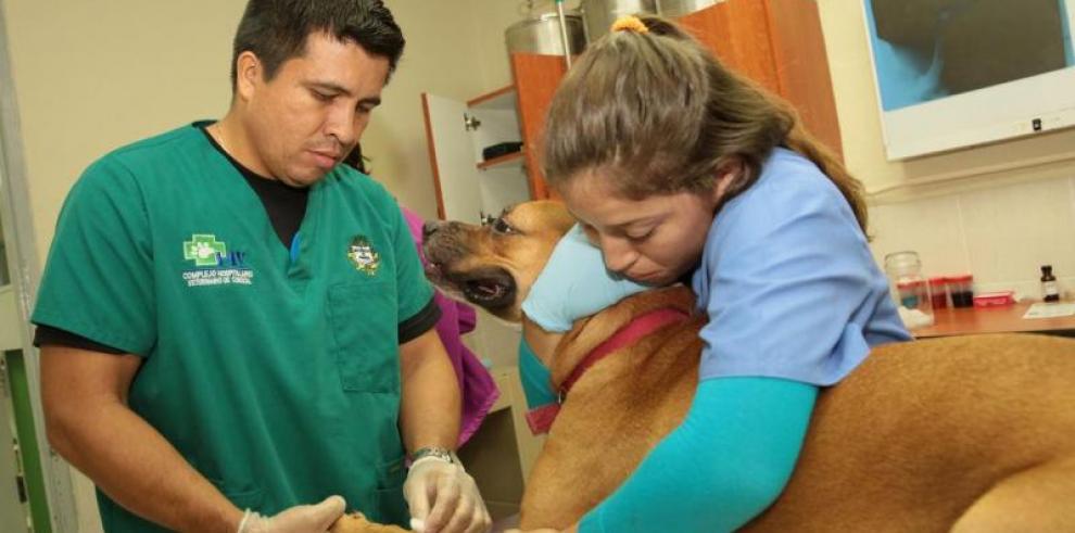 Empresarios llaman al diálogo, ante paro de médicos veterinarios
