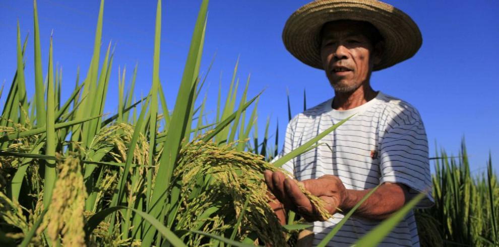 La tecnología impulsa la producción de cereales en China