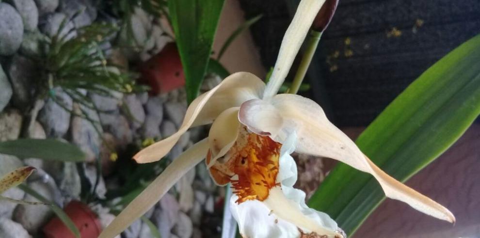 Los guardianes de las orquídeas