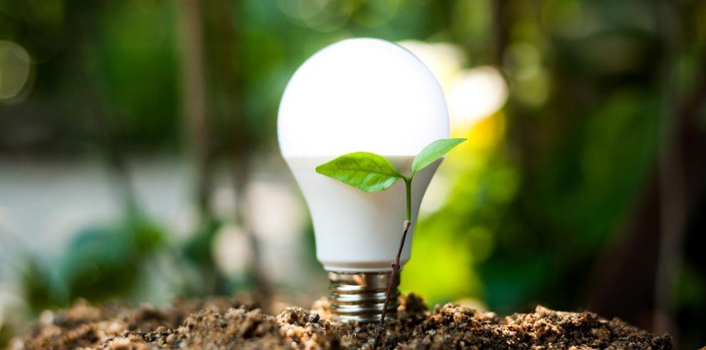 Electricidad a partir de plantas