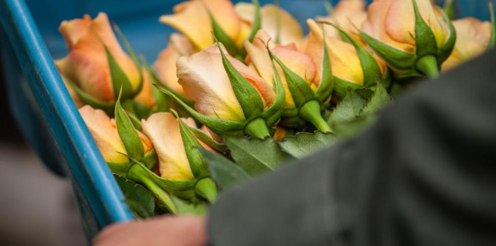 Transportan 11,853 toneladas de flores