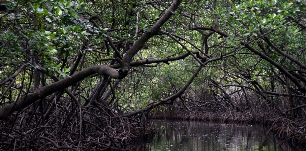 Panamá, el noveno país que más bosques tala