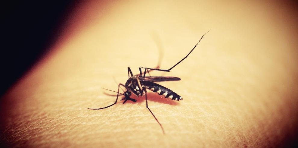La OMS advierte de que la lucha contra la malaria se ha estancado