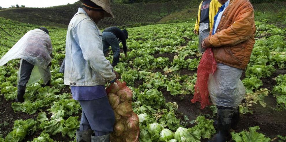 La producción agrícola y pesquera crecerá 17% al 2027