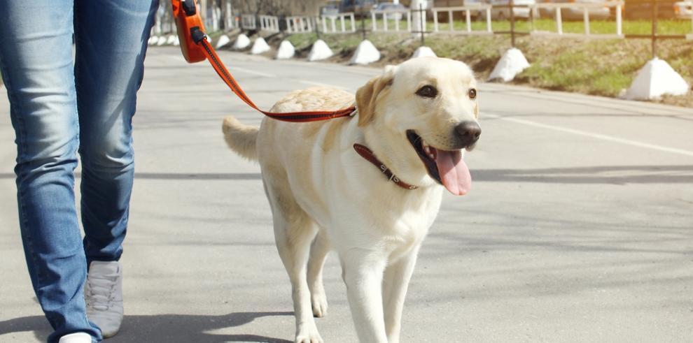 Los paseadores de perros luchan por salir de la informalidad