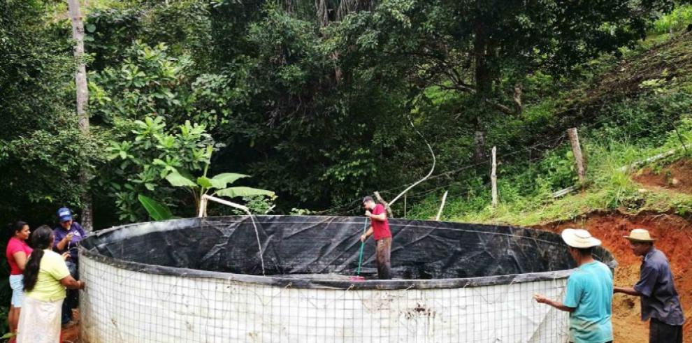 Instalan tinas para cultivo de tilapias en Herrera