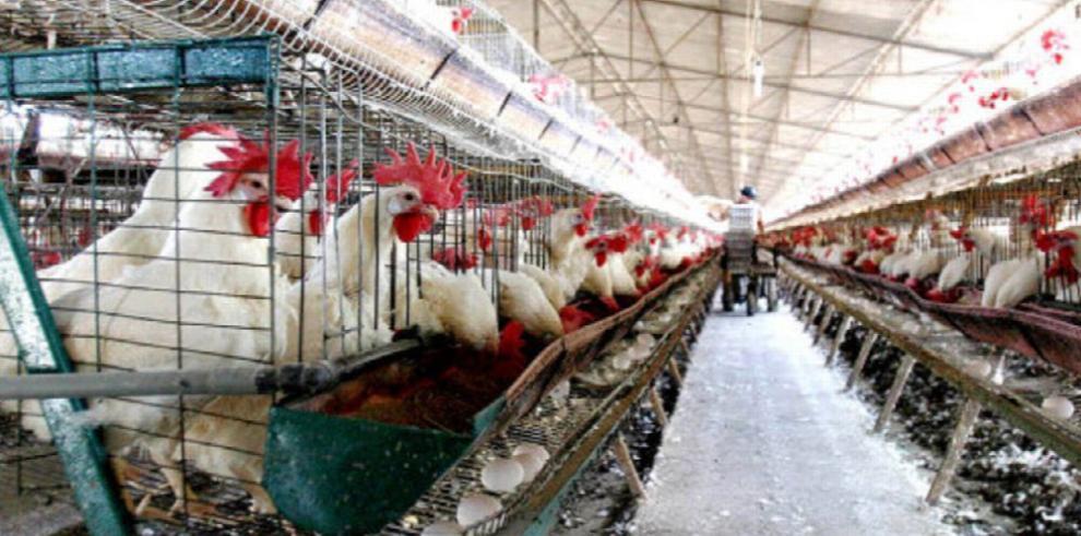 Sube consumo per cápita de pollo a 90 libras