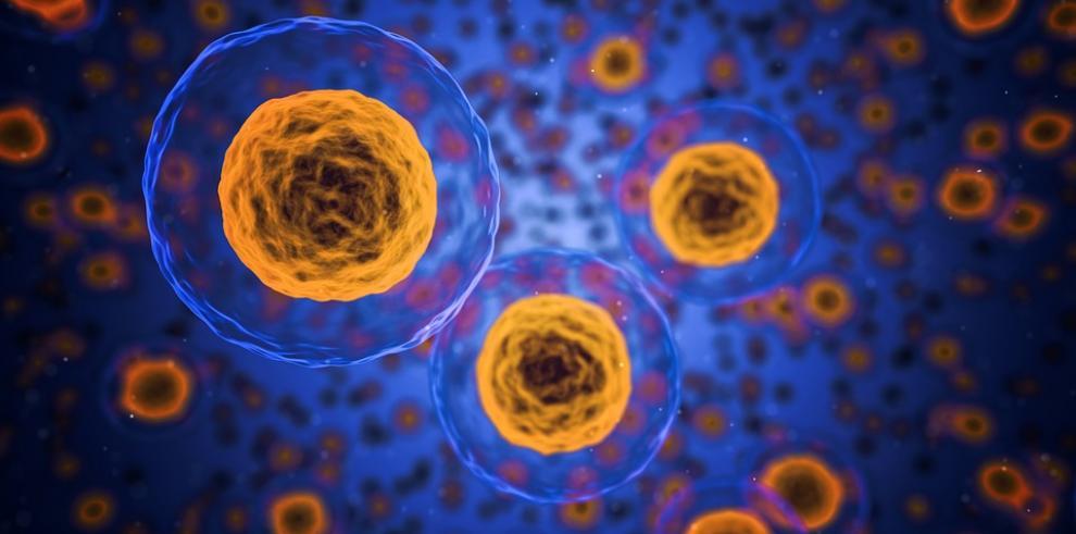 Virus Nipah causa 10 muertos y pone en alerta al sur de la India