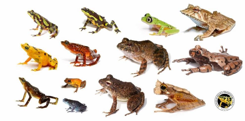 Anfibios : la lucha por su sobrevivencia en cautiverio
