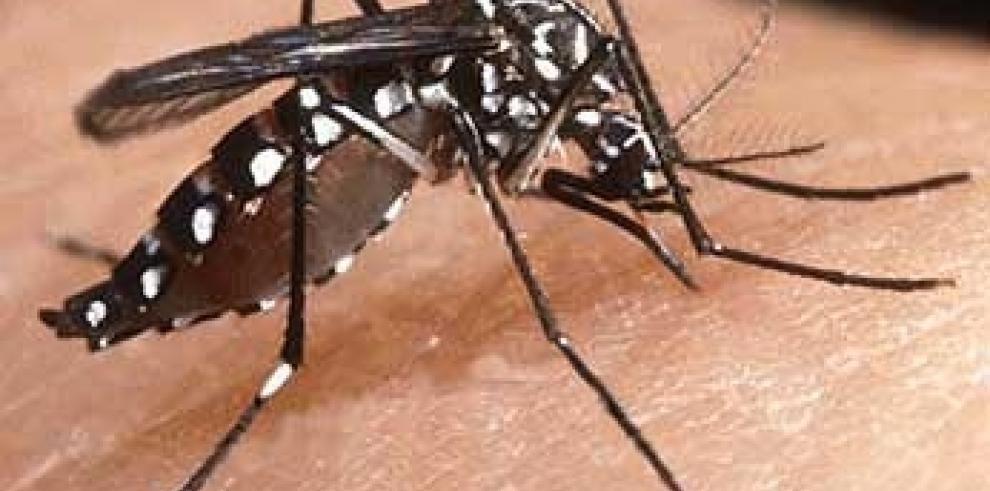 República Dominicana registra más de 1.100 casos de dengue este año