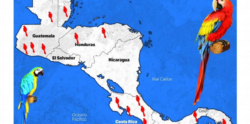 Trazan ruta para observar aves en toda Centroamérica