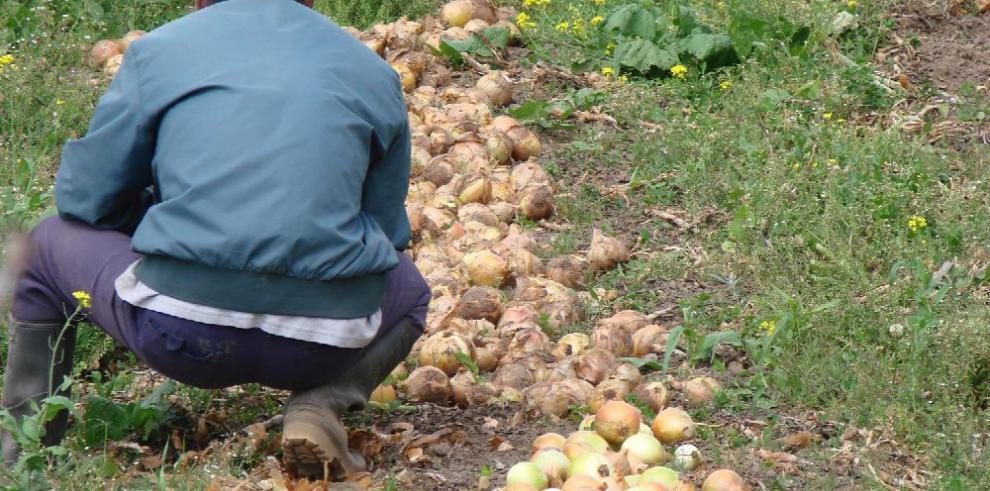 Cebolleros piden revisión técnica